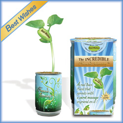 Magic Beans Products - Best Wishes Plant