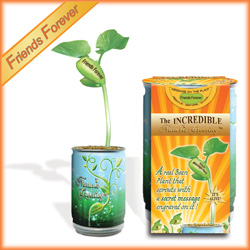 "Magic Beans Products ""Friends Forever"" Plants"