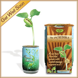 "Magic Beans ""Get Well Soon"" Plant Kit"