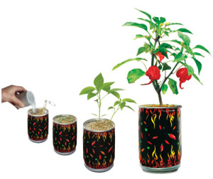 Basic Steps For Growing Your Magic Plant Chili Peppers