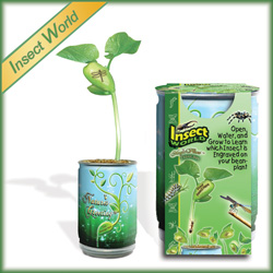 Insects Plant Growing Kits for Kids