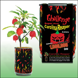Carolina Reaper Chili Pepper Growing Kits