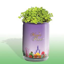 Magic Plant Herb Growing Kits