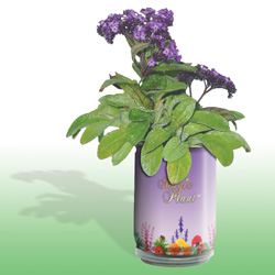 Forget Me Not Growing Kits
