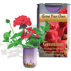 Grow Your Own Geraniums