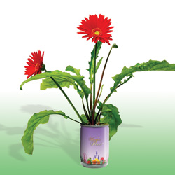 Gerbera Growing Kits