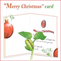 Merry Christmas Nature's Greeting Card and Plant