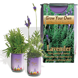 Lavender Herb Growing Kit