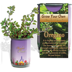 Oregano Herbs Growing Kits