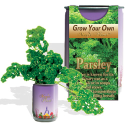 Parsley Herbs Growing Kits