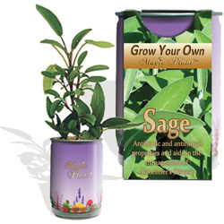 Sage Herbs Growing Kits