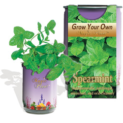Spearmint Herb Growing Kit