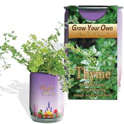 Thyme Herbs Growing Kits