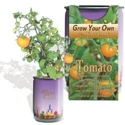 Tomato Growing Kits