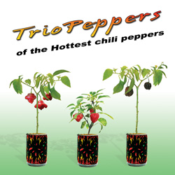 Trio Peppers
