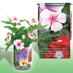 Vinca Flower Growing Kit