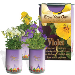 Grow Your Own Viola Kit